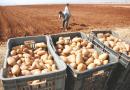 Troisième opération de déstockage de pomme de terre : Freiner la hausse des prix